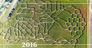 Maislabyrinth Dalheim 2016